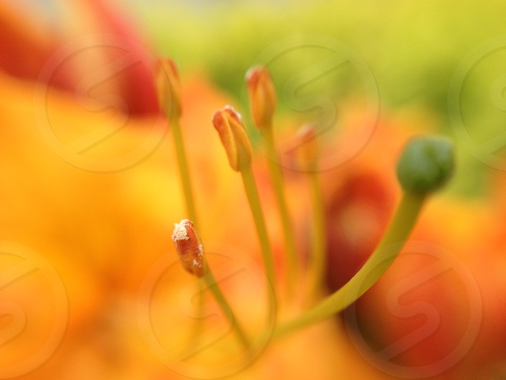 red and green flower on macro photography photo