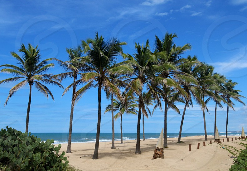 view of coconut trees at the beach photo