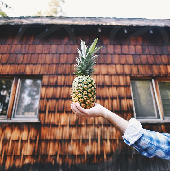person holding pineapple fruit photo