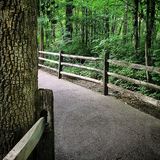 pebbled fenced pathway on wood photo