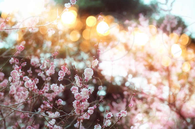 tilt shift photography of pink flowers photo