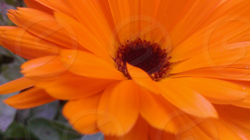shallow focus photography of orange sunflower photo