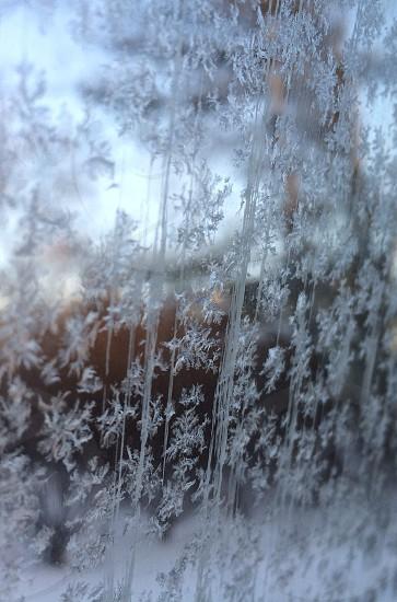 snowflakes  photo