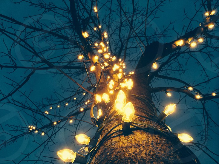 Christmas Lights Florence Massachusetts photo