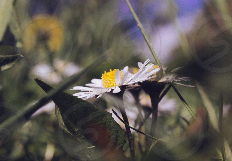 Lovely flower - that's white and yellow - with an abstract for- and background  photo