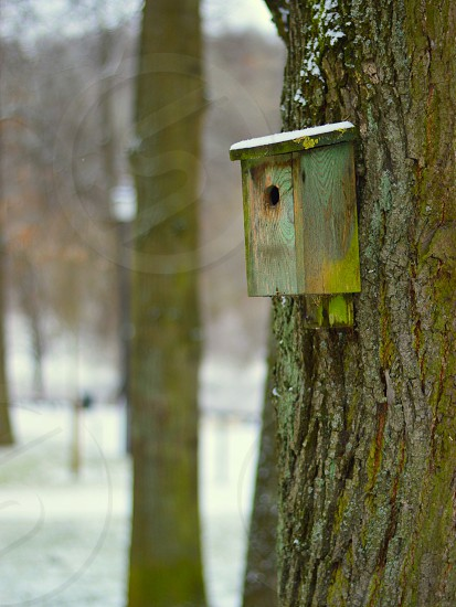 A nest-box for a bird in a tree photo