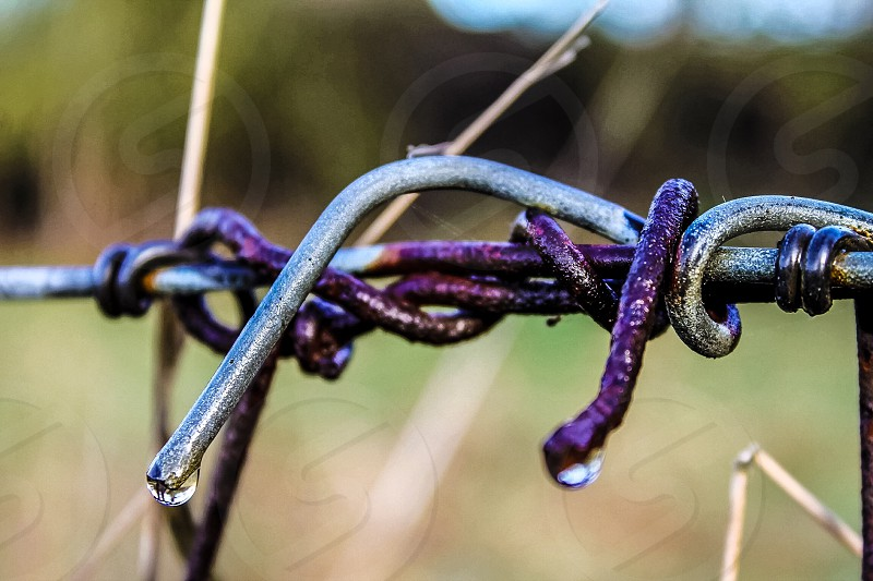 Extreme colours of barbed wire photo