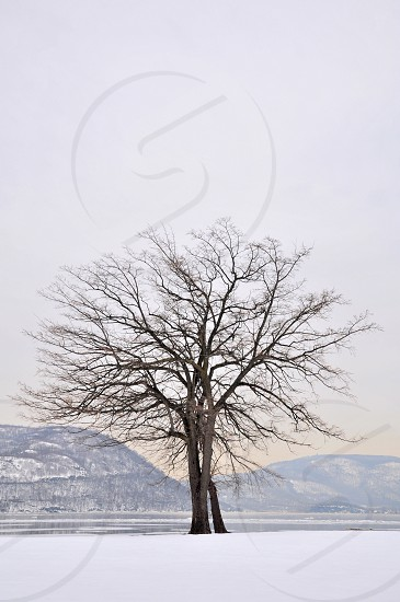 bare tree on snow covered field with mountain background under gray sky photo