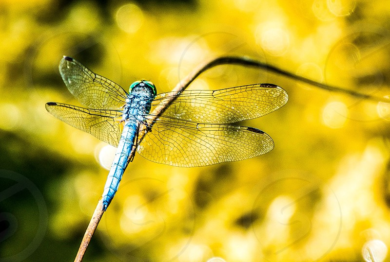 Dragonfly nature outdoors photo