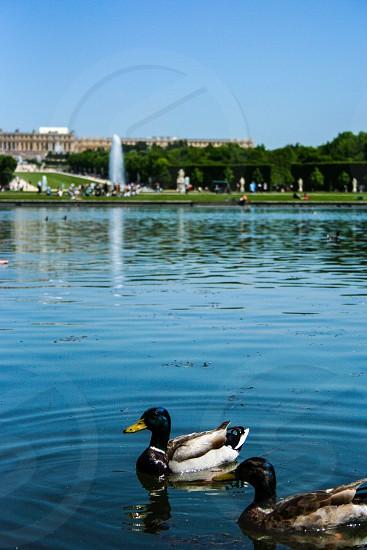 Versailles FR photo