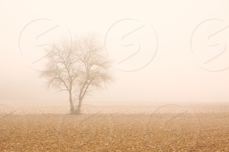 landscape photo of brown tree photo