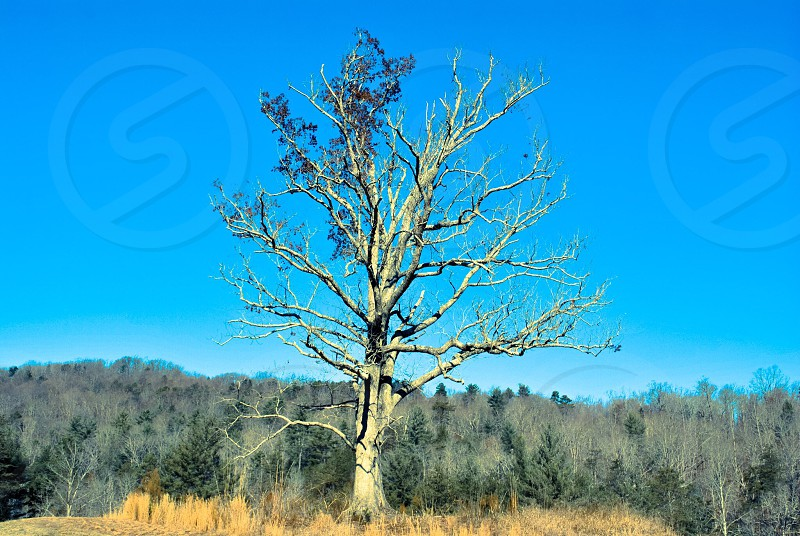 brown withered tree photo