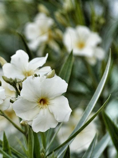 White flower flowers tree plant garden spring bloom nature macro beautiful photo
