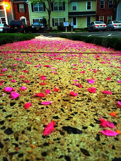 pink petal flowers on floor photo