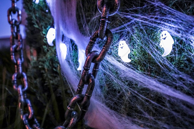 halloweendecorationholidayghostspookylightschainsilverwhiteilluminationtreespider web photo
