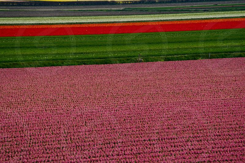 fields of flowers photo