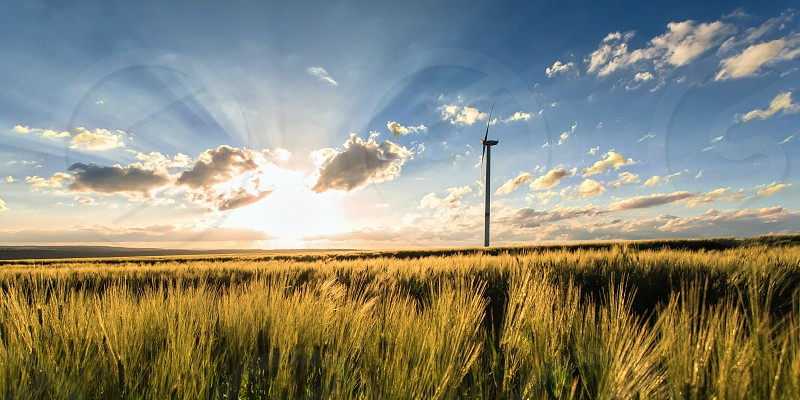 wind turbine in the middle of a field photo