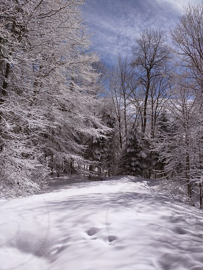 winter snow forest outside ice photo