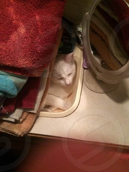 There's towels on the sink… and a surprise sleeping inside it! photo