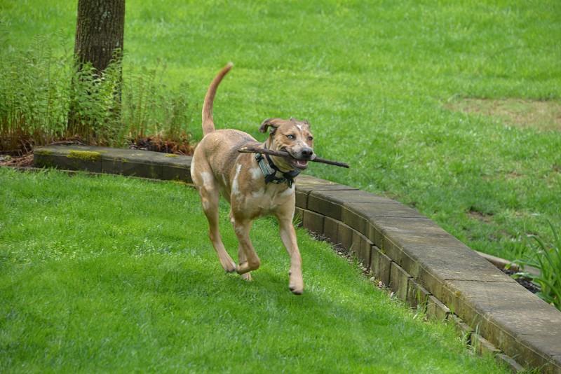 Playful dog retrieving. photo