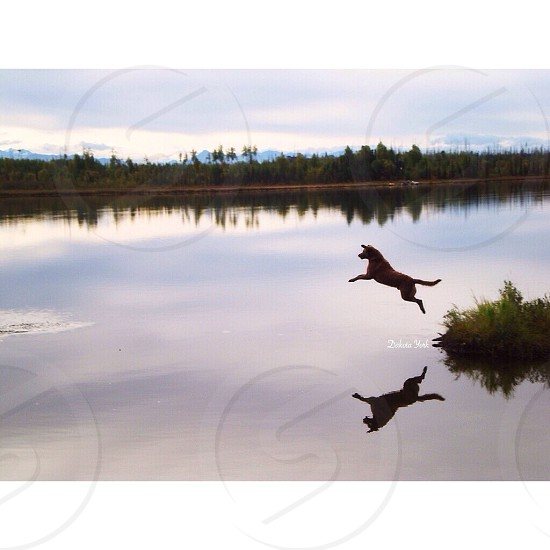 dog leaping on the water photo