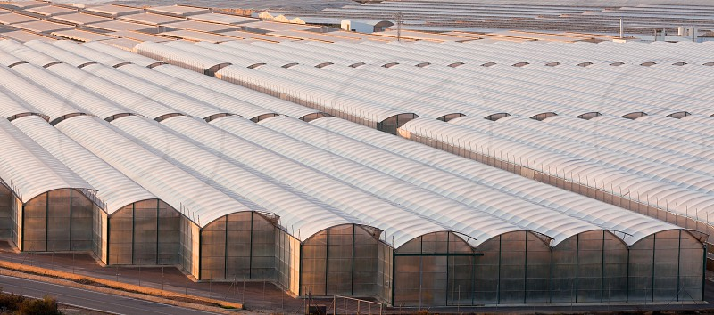 Large scale commercial greenhouse structures cover endless areas photo