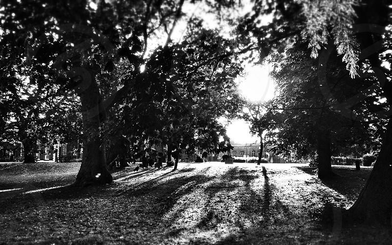 Sun at the park photo