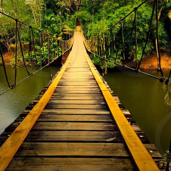 Roatan Island Bridge photo