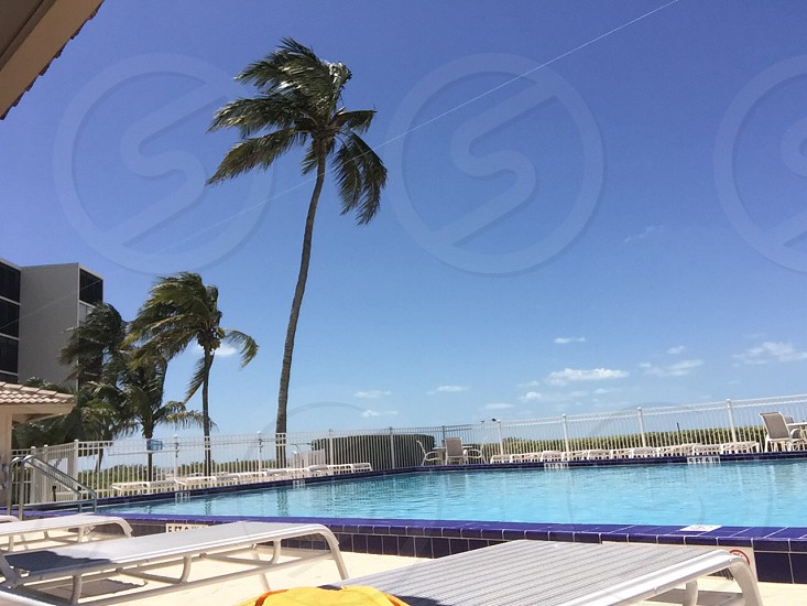 indoor rectangular swimming pool surrounded by line up sun lounger and coconut tree under blue and white sky photo