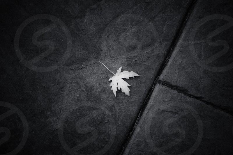 white leaf on the black ground photo