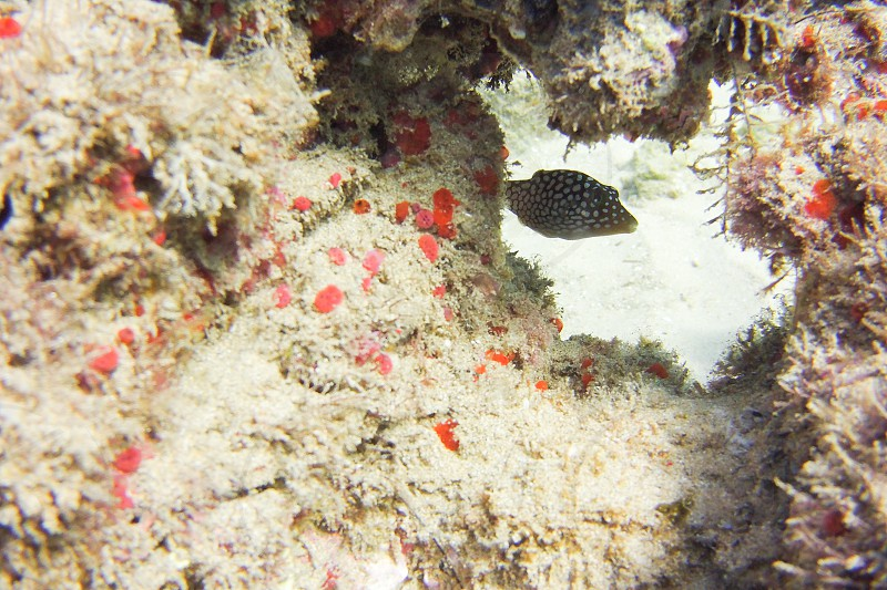 Fish coral snorkeling Scuba diving photography water ocean photo