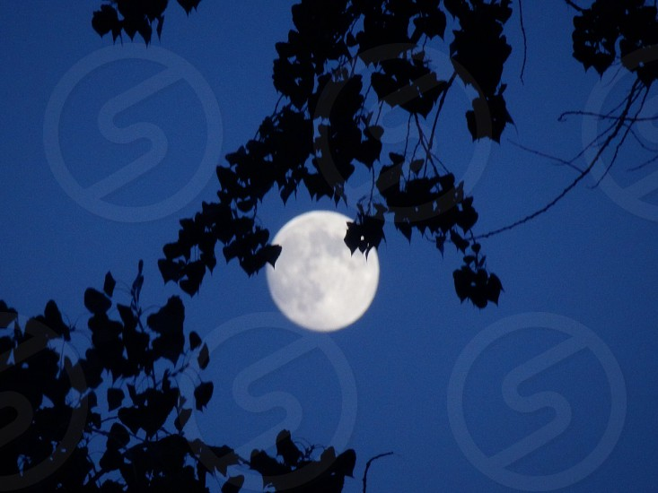 Full moon thru my trees! photo