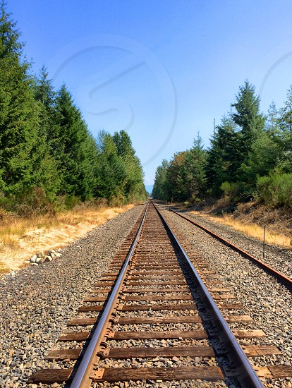 Railroad tracks lost woods green trees photo