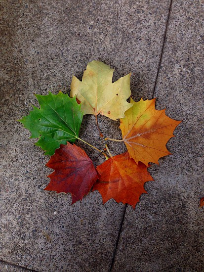 green red and yellow leaves photo