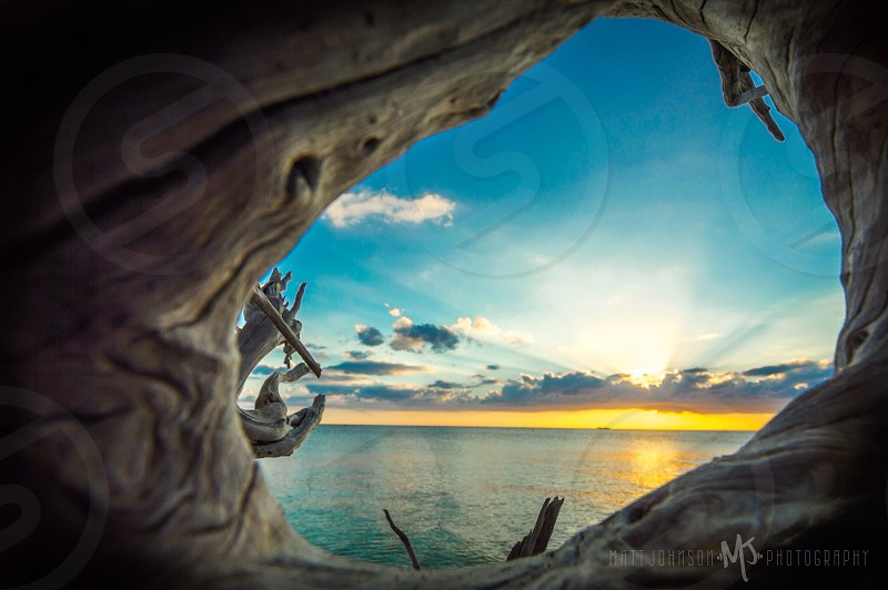 Looking through a fallen tree out into the ocean at lovers key state park photo