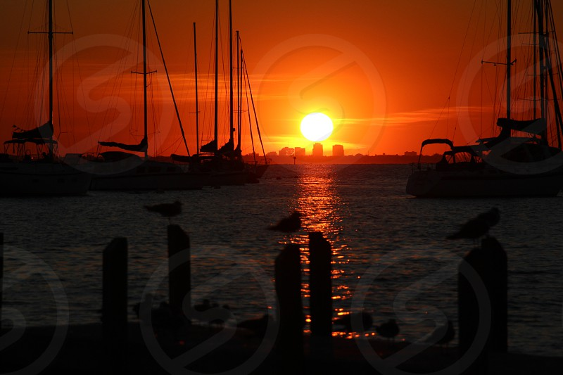 flock of bird near sea during sunset photo
