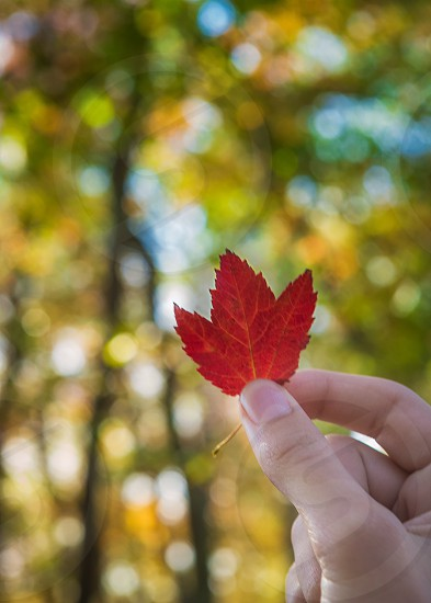 First turned leaf of fall  photo