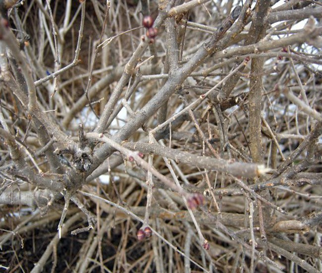 close up photo of brown withered tree photo