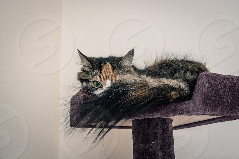 Cat kitten cat tree eye cat eyes kittie photo