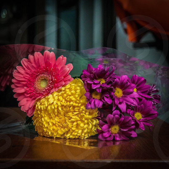 purple chrysanthemum yellow bachelors button and pink gerbera daisy photo
