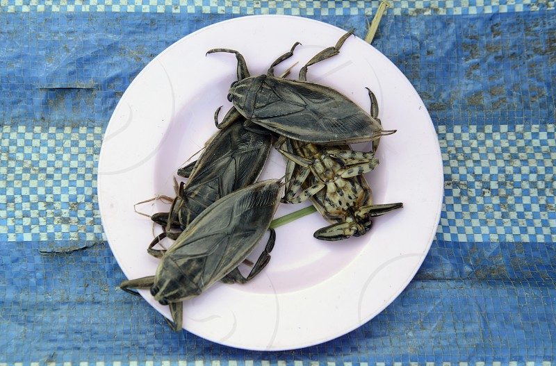 ASIA SOUTHEAST ASIA THAILAND ISAN FOOD INSECTS INSEKTS AMNAT CHAROEN PLATE ASIAN FOOD THAI FOOD LAO FOOD photo