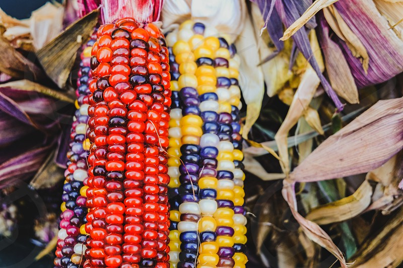 Close-up multicolored Indian Corn at a fresh market photo