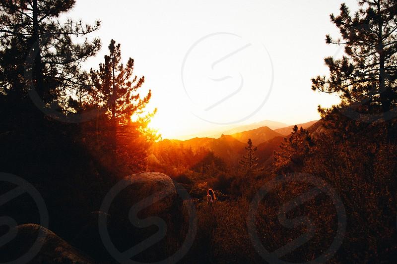 santa barbara sunset summer exploring hiking adventure sunflare mountains trees photo