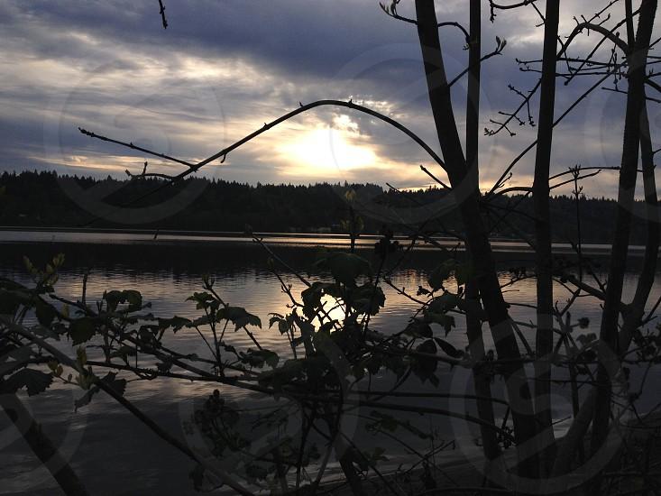 morning lake through the branches photo
