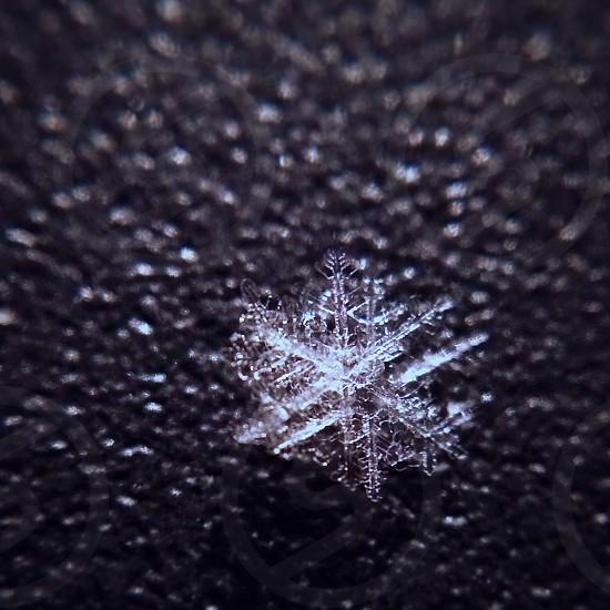 snowflake macro photo photo