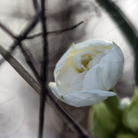white petal flower painting photo