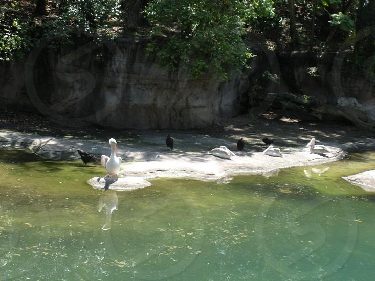 Birds along the river photo
