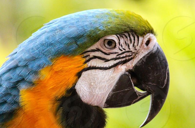 blue macaw parrot profile close up photo