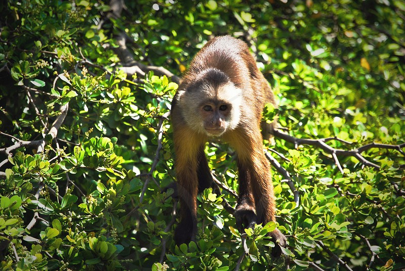 brown monkey on the tree branch photo