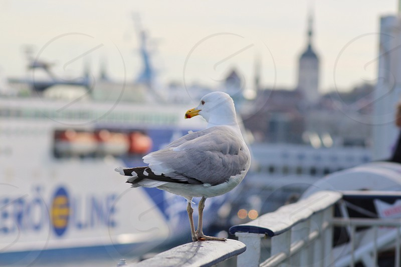 Cruise ship seagull sea travel  photo
